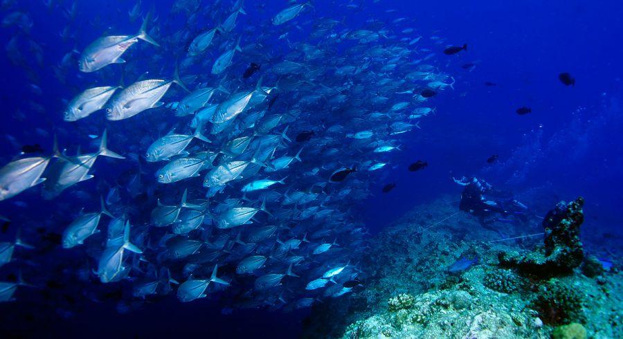 Unterwasserwelt auf Raja Ampat in Indonesien