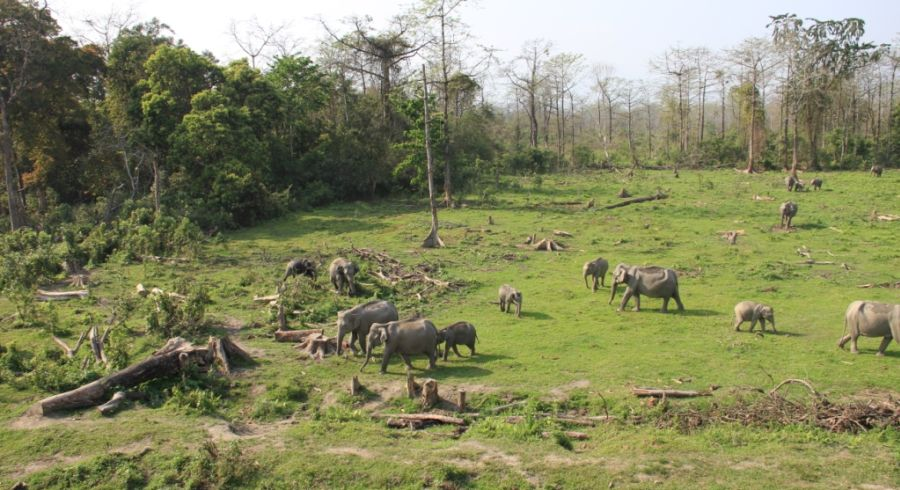 Elefantenherde vor einem Wald