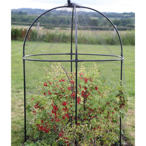 Round Steel Fruit Cages from Haxnicks