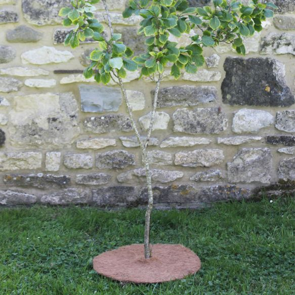 Tree Mat from Haxnicks