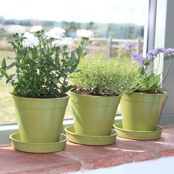 """5"""" Bamboo Pots - Sage Green"""