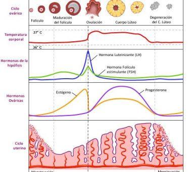 ¿Cómo usar la progesterona para regularizar tu ciclo menstrual?
