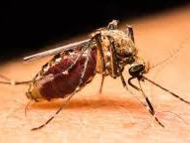 Diagnosing Zika