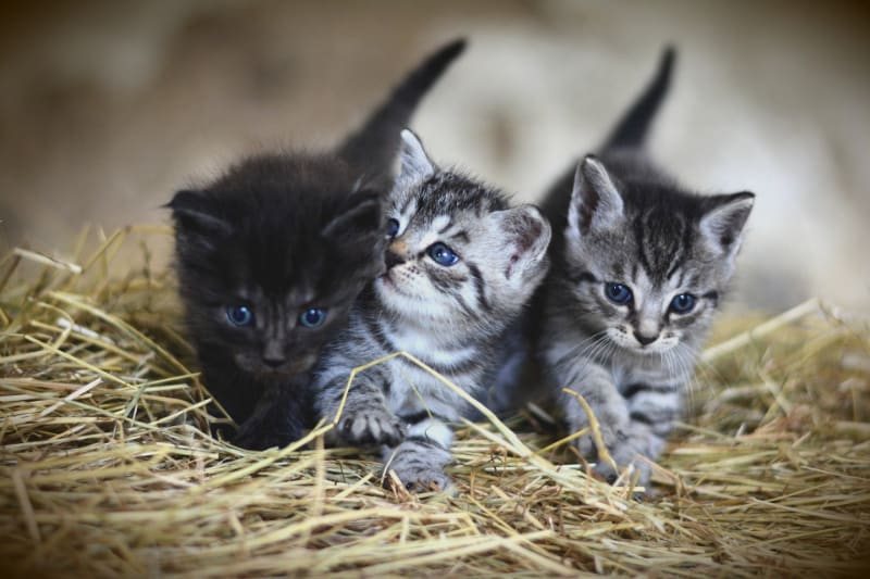 Best Cat Food for a Kitten (Healthy Nutritional Feeding)