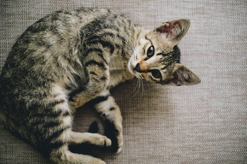 Best Price Cat Scratching Post