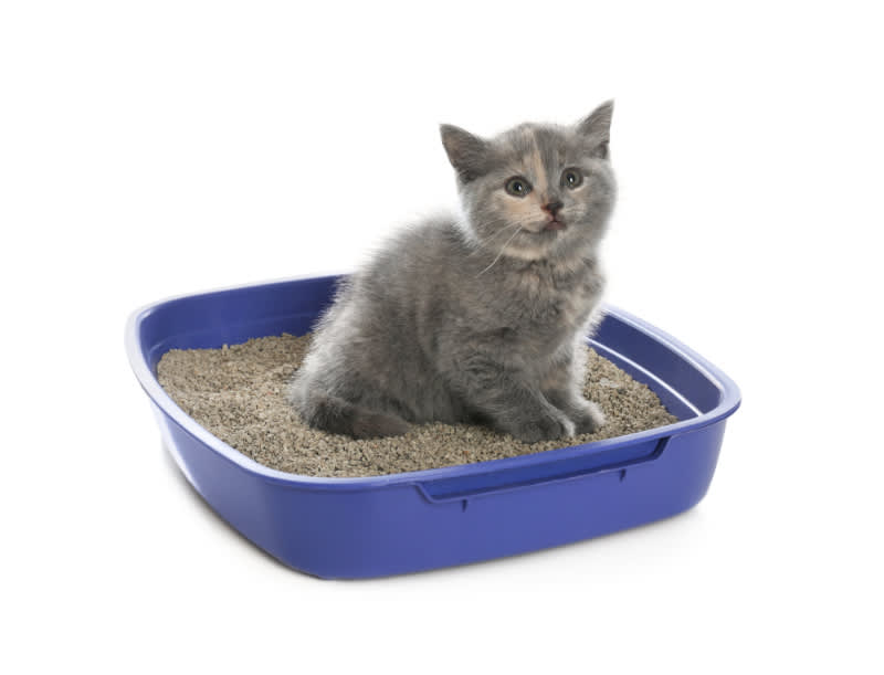 How Much Litter to Put in Litter Box