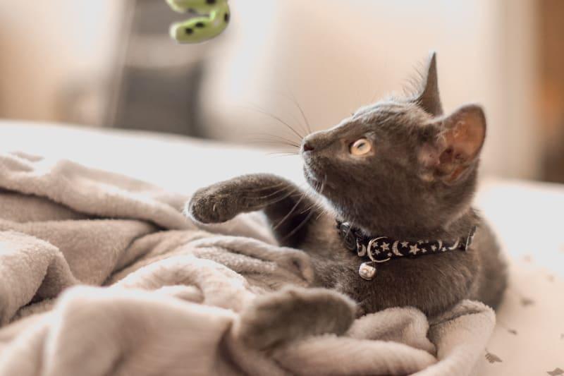 Top 10 Best Cat Houses & Condos
