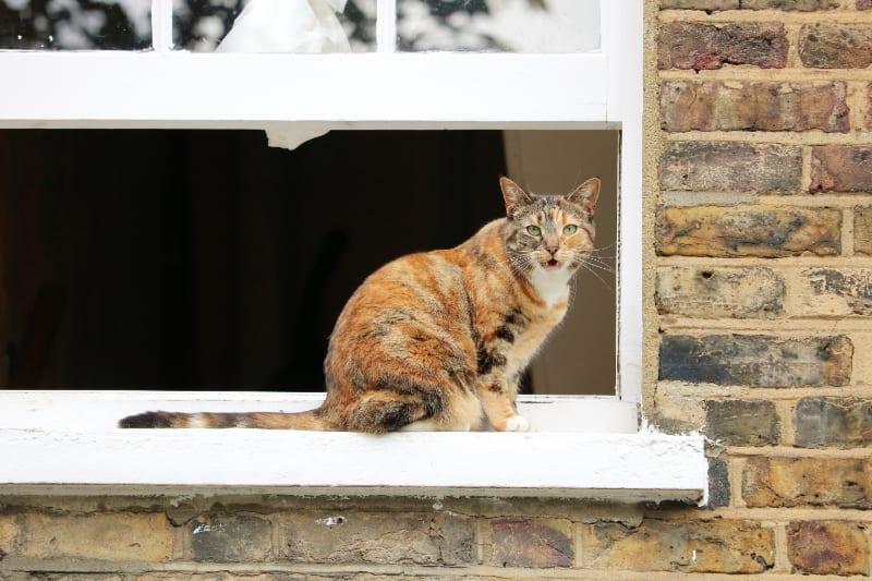 Waterproof Outdoor Cat Houses
