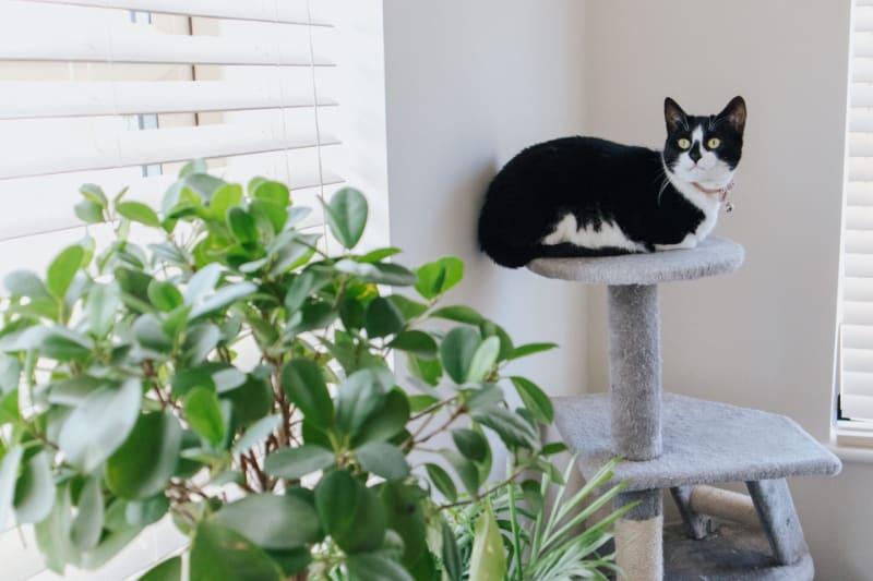 Why Do Cats Like Cat Trees?