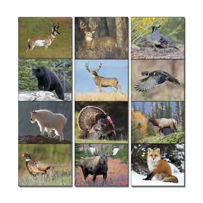 Picture of Wildlife Portraits Wall Calendar