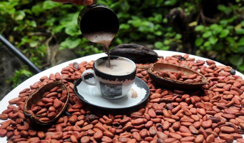 Xoco 'Lattes Los Carrerantes: Chiapas Chocolate Tour: Organic Cacao and Community Cooperatives