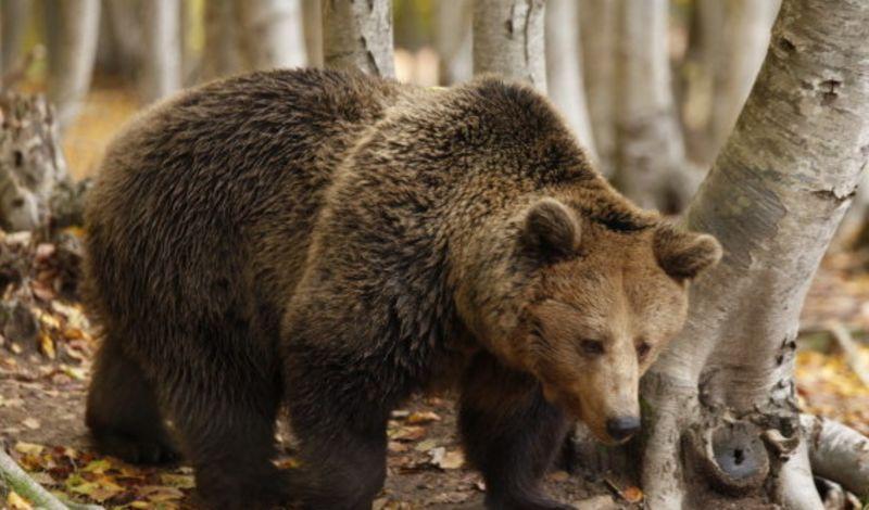 Florina Animal Tour: Visit Nymfaio Greece Bear Sanctuary ...