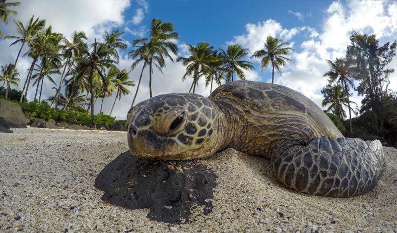 Latin American Sea Turtles: Playa Blanca Animal Tour: Rescue Turtles off a Beach