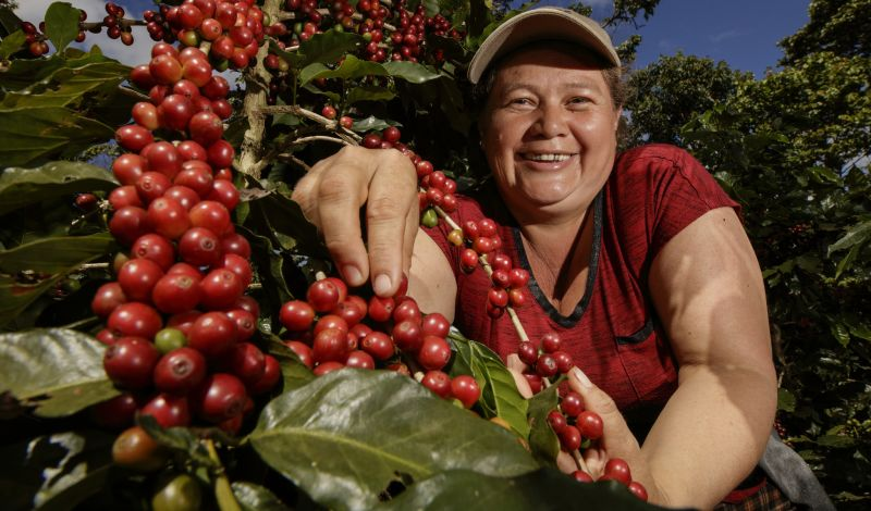 La Juanita Finca Verde: Colombia Coffee Tour: Behind the Scenes of Traditional Coffee Production