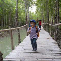 Man made forest - bamboo boardwalk