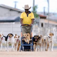 Cape Town animal care projects