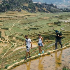 Trekking Vietnam rice paddy fields