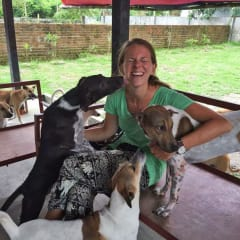 play with Yangon Animal Shelter dogs
