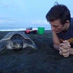 Loggerhead sea turtle - Carate Beach