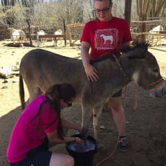 caring for donkey - Aruba tours
