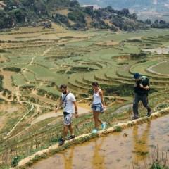 Trekking Vietnam rice paddy fields