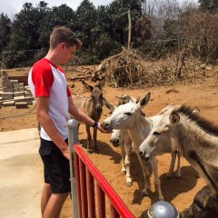 caring for donkeys -  tours Aruba