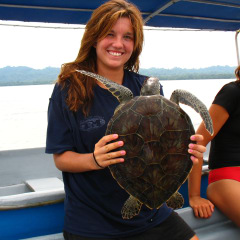 Latin American Sea Turtles
