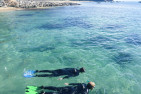 Snorkelling With Sea Dragons - Child