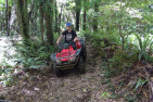 Quad Bike Adventure for Two