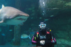 Shark Diving For Non Certified Divers