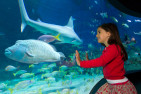 Melbourne Aquarium General Admission - Child
