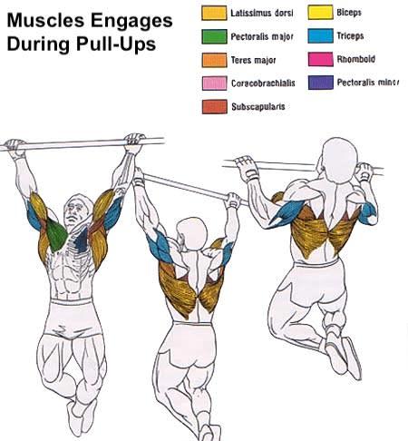 chins vs pull ups