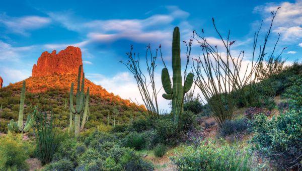 7: Arizona