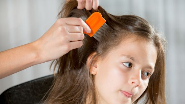 Kerosene, mayonnaise, baby oil—none of these will cure lice