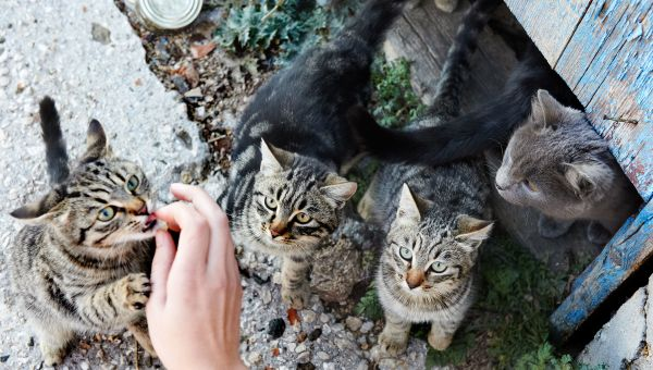 Caring for strays and outdoor pets