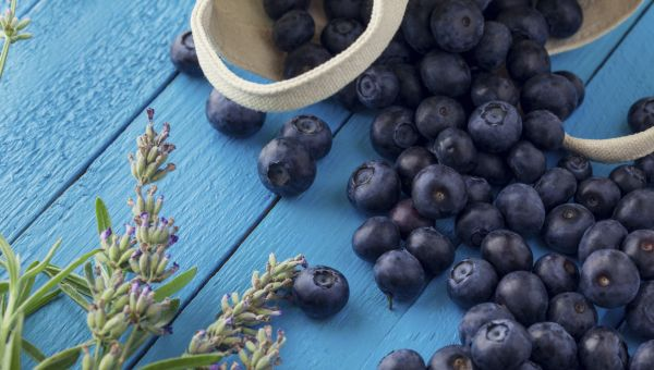 Antioxidant-Rich Blueberries: The Super Brain Food