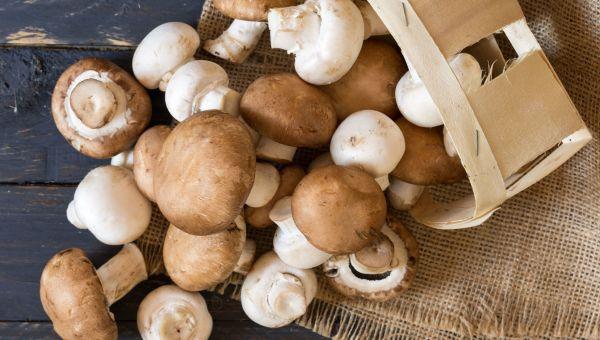 The Link Between Mushrooms and Brain Health