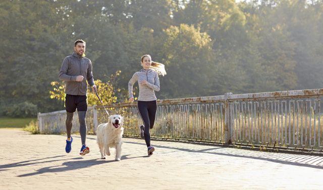 Enhance Physical Activity with Four Legs