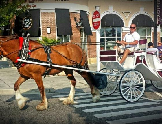 Complimentary Carriage Rides at The Market Common!