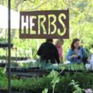 28th Annual Asheville Herb Festival