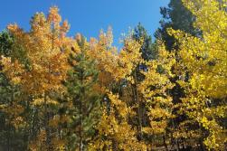 Fall Colors in Cheyenne