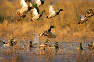Duck-hunt.jpg