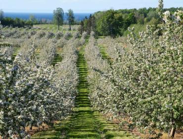 58th Annual Williamson Apple Blossom Festival