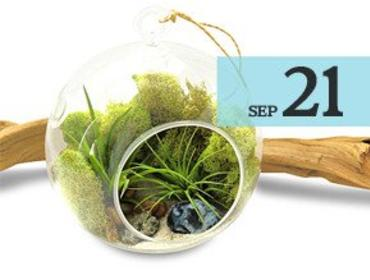 Decorating With Crystals: Air Plant Terrarium Workshop