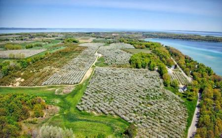 Aerial Shot of Blossoms on Old Mission Peninsula