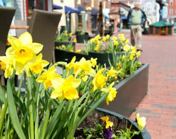 http://res.cloudinary.com/simpleview/image/upload/crm/newportri/bowen-s-wharf-daffodils_credit-Discover-Newport-3999_0a34f9a6-5056-b3a8-49b5841a5a9c4c36.jpg
