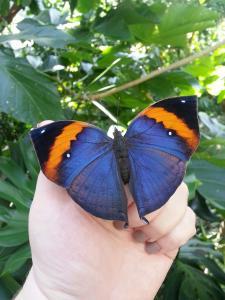 Butterfly Center HMNS