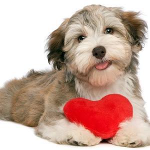 Dog Valentine's Day Food Tour