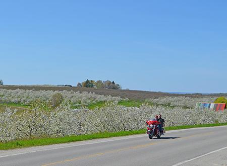 Motorcycling through Blossoms