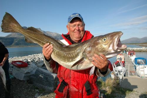 Vårtorskefiske på Helgeland